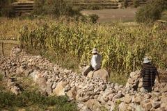 Locale due che lavora ad un campo di grano Immagini Stock Libere da Diritti