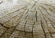 Locali di legno Fotografia Stock Libera da Diritti