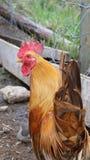 Località di soggiorno dell'azienda agricola ed animali da allevamento d'annata Fotografie Stock