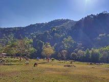 Località di soggiorno di Namkat Yorrapa, provincia di Oudomxay, Laos fotografie stock libere da diritti