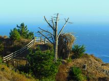 Località di soggiorno di Treebones Fotografie Stock