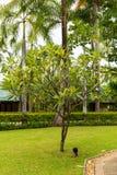Località di soggiorno di stazione termale tropicale a Phuket, Tailandia - viaggio e turismo Bello paesaggio nell'area dell'hotel Fotografie Stock