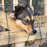 Localización sola triste del perro en jaula Imagen de archivo