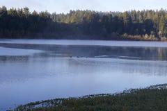 Localizado ao longo do rio do russo, o parque regional do beira-rio está apenas minutos de Windsor e de Healdsburg do centro foto de stock royalty free