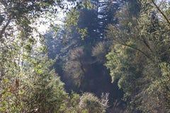 Localizado ao longo do rio do russo, o parque regional do beira-rio está apenas minutos de Windsor e de Healdsburg do centro fotografia de stock