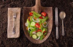 Locally grown garden salad on rusted shovel. Organic farm to table healthy eating concept on soil background Royalty Free Stock Photography