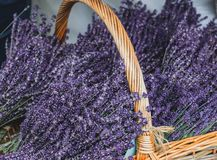 Locally grown lavender in a wicker basket at local farmers market royalty free stock image