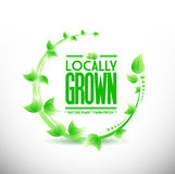 locally grown leaves plant illustration Stock Image