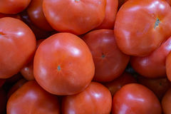 Locally Grown Tomatoes Royalty Free Stock Image