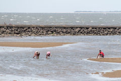 Locals collecting shellfish along the beach Royalty Free Stock Photo