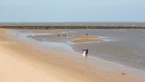 Locals collecting shellfish along the beach Stock Image