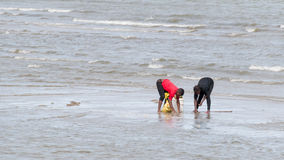 Locals collecting shellfish along the beach Royalty Free Stock Images