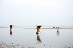 Locals people on the beach looking for molluscs, during low tide. In clear sky Stock Image
