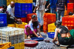 Locals sorting shrimp in Mumbai, India. Locals sorting shrimp at the marina in Mumbai, India royalty free stock photos