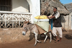 Locals using a donkey for transport in Lamu, Kenya Stock Image