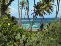 Paradise view of the beach of Cap Chavalier on the island of Martinique royalty free stock image