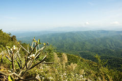 Located in Sri Nan national park, northern of Thai Stock Photos