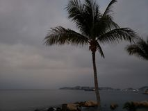 Tropical landscape with the silhouette of a palm tree on a cloudy day. Located in the state of Guerrero, city with beach and tropical climate for vacation stock photo
