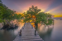 Wooden pier between mangrove trees stock photos