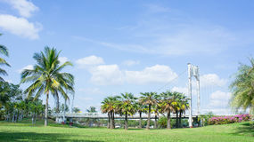Location in the park , bridge and palms  outdoor in the park Stock Image