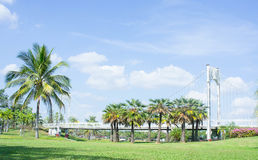 Location in the park , bridge and palms  outdoor in the park Stock Images