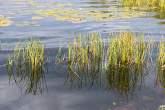 Loch Aboyne-Ufer Stockbilder