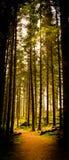 Loch Ard-Wald Stockbilder