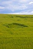 Loch auf dem Weizengebiet Lizenzfreie Stockfotografie