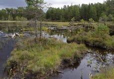 Loch an Eilein Bog Pools. Peat Bog Pools & Loch an Eilein, Rothiemurchus Forest, Speyside, Scotland stock photos