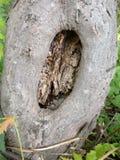 Loch in einem Baumstamm Lizenzfreie Stockbilder