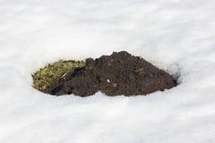 Loch einer Mole Stockfotos