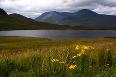 Loch en moerasland, Schotland stock afbeeldingen