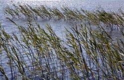 Loch Finlaggan Lizenzfreies Stockfoto