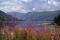 Loch Fyne en Ecosse Image stock