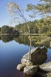 Loch Garten in Autumn. Loch Garten and birch in the Cairngorms national park of Scotland Stock Image