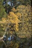 Loch Garten in Autumn colour in Scotland. Royalty Free Stock Photos