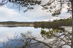 Loch Garten in the Cairngorms National Park. Loch Garten in the Cairngorms National Park of Scotland royalty free stock photos
