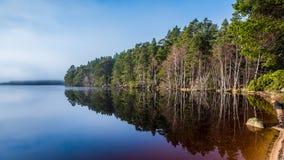 Loch Garten reflections Royalty Free Stock Photo