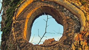 Loch im Baum Stockbilder