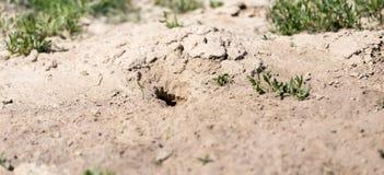 Loch im Bodentier in der Natur lizenzfreies stockbild