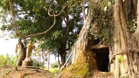Loch im Großen Baum mit Buddha-Statue Lizenzfreie Stockfotos