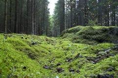 Loch im Wald. Stockbilder