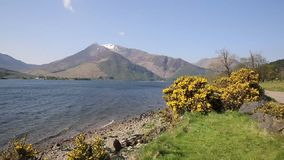 Loch Leven Lochaber Geopark Scotland uk view to Glen coe with snow topped mountains and yellow flowers stock footage