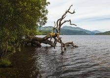 Loch Lomond视图 免版税库存图片