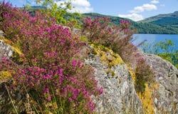 Loch Lomond royaltyfria foton