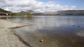 Loch Lomond Escócia Reino Unido o parque nacional de Trossachs em um dia calmo com o destino escocês do turista dos patos e das m filme