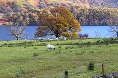 Loch Lomond jesień Zdjęcie Stock