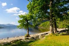 Loch Lomond på rowardennan, sommar i Skottland, UK Arkivfoton
