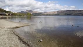 Loch Lomond Scotland UK The Trossachs National Park on a calm day with ducks and mountains Scottish tourist destination stock footage