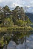 Loch Mallachie, het Nationale Park van Rookkwartsen, Schotland stock afbeeldingen